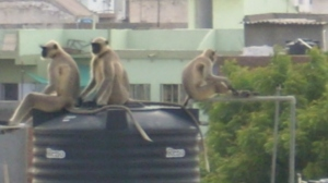 "what is the water level? that's a monkey-job.AMC(ahmedabad 'MONKEY"" CORP.)"
